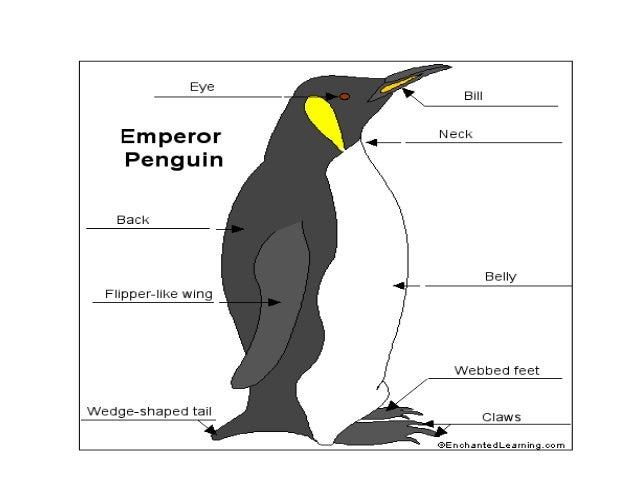 Moosa khokhar emperor penguin