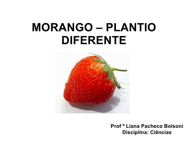 MORANGO – PLANTIO DIFERENTE Prof ª Liana Pacheco Bolsoni Disciplina: Ciências