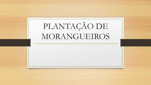PLANTAÇÃO DE  MORANGUEIROS