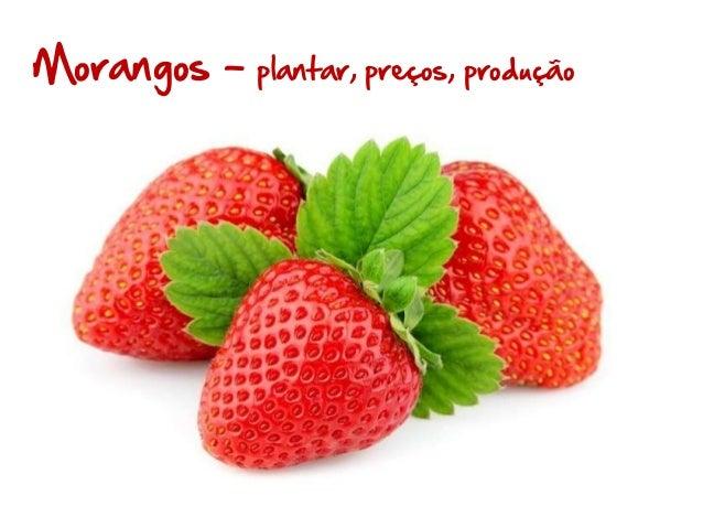 Morangos –  plantar, preços, produção