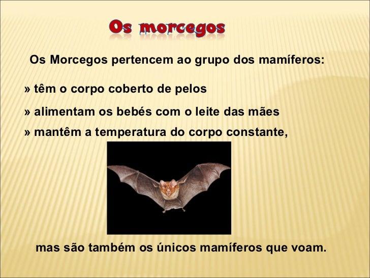 Os Morcegos pertencem ao grupo dos mamíferos:» têm o corpo coberto de pelos» alimentam os bebés com o leite das mães» mant...