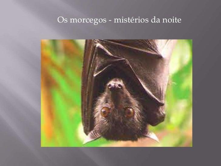 Os morcegos - mistérios da noite