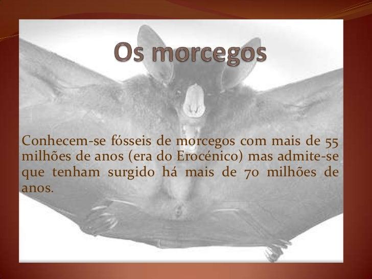 Conhecem-se fósseis de morcegos com mais de 55milhões de anos (era do Erocénico) mas admite-seque tenham surgido há mais d...