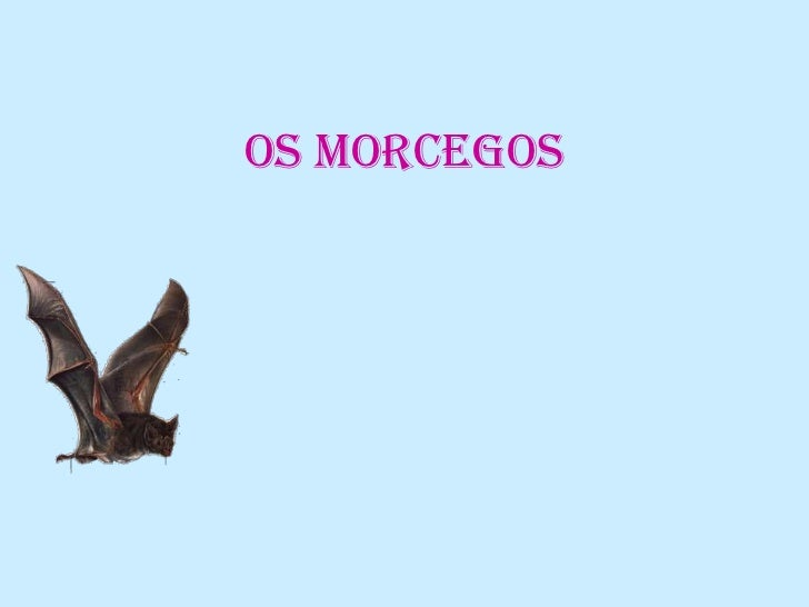Os morcegos