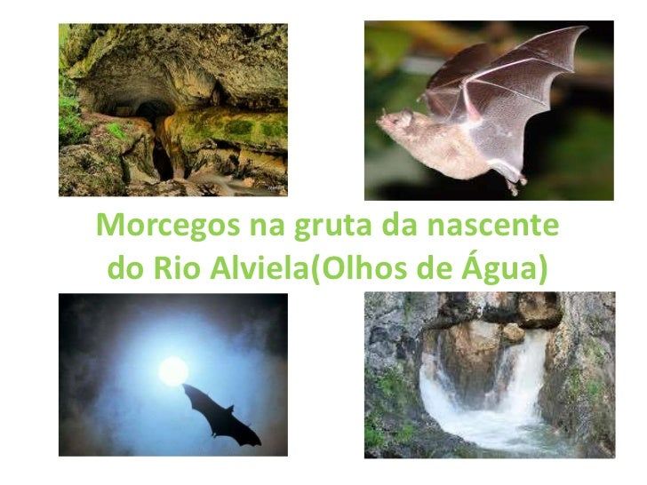 Morcegos na gruta da nascentedo Rio Alviela(Olhos de Água)
