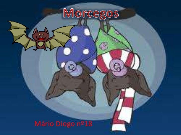 Mário Diogo nº18