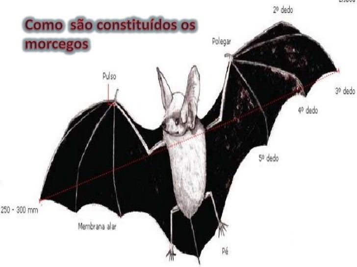 Morcegos mario5 e