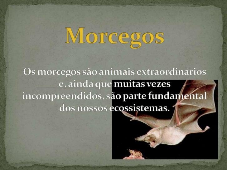  Os morcegos (ordem Chiroptera, do grego: kheir = mão +  pteron = asa) são os únicos mamíferos capazes de  voar, tendo se...