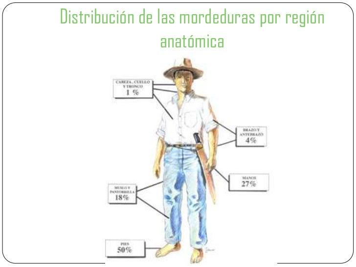 Encantador Anatomía De Una Mordedura De Serpiente Ilustración ...