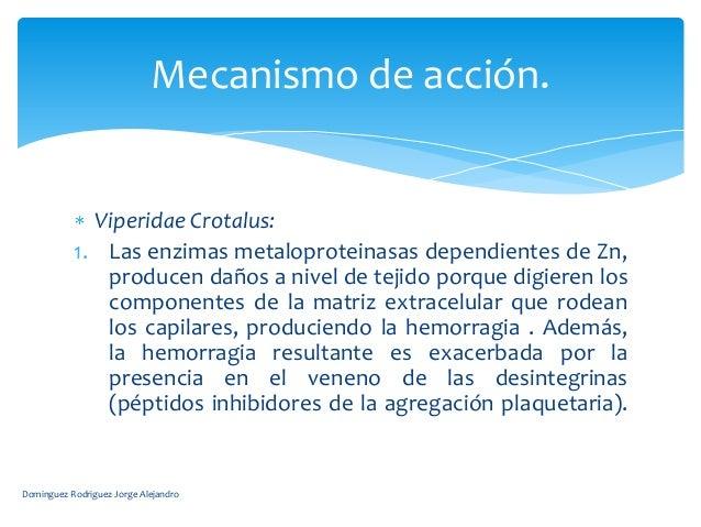 Mecanismo de acción.             Viperidae Crotalus:           1. Las enzimas metaloproteinasas dependientes de Zn,       ...