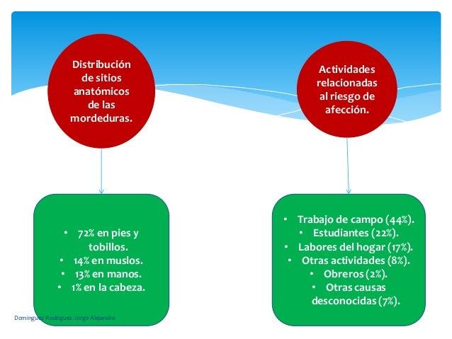 Distribución              Actividades                     de sitios              relacionadas                   anatómicos...