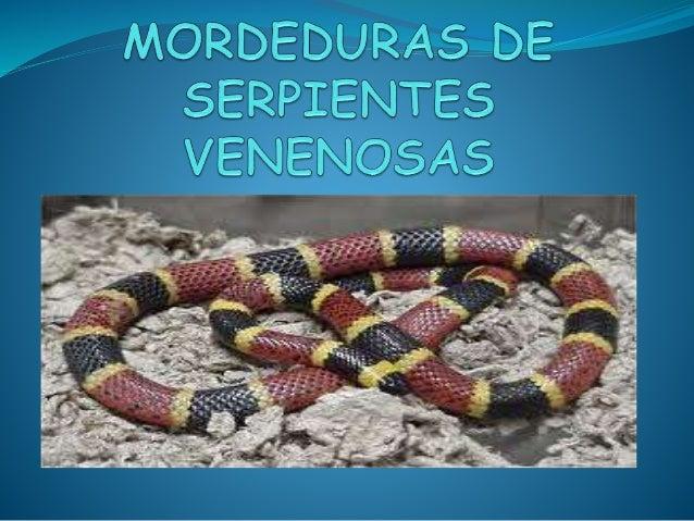 INTRODUCCION • En honduras hay 16 especies cuya mordedura puede ser mortal. • Las funciones del veneno ayudan a matar a su...