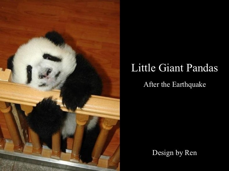 Little Giant Pandas After the Earthquake Design by Ren