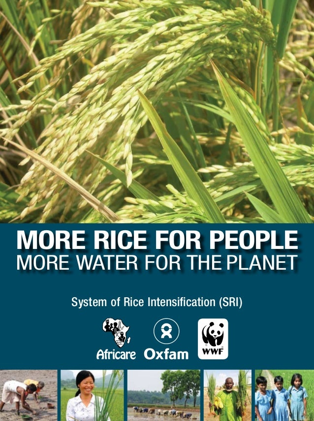 MORE RICE FOR PEOPLE MORE WATER FOR THE PLANET System of Rice Intensification (SRI)