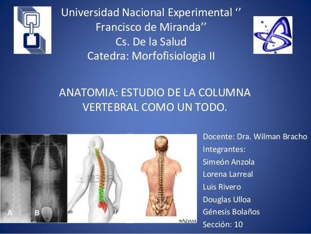 Columna Vertebral UNEFM Medicina