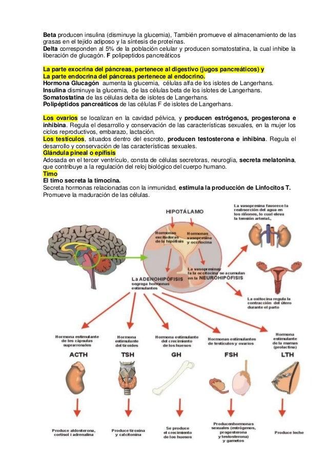 Moderno Partes Del Cuerpo Humano Que Comienzan Con F Viñeta ...