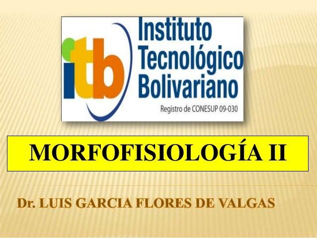 MORFOFISIOLOGÍA II
