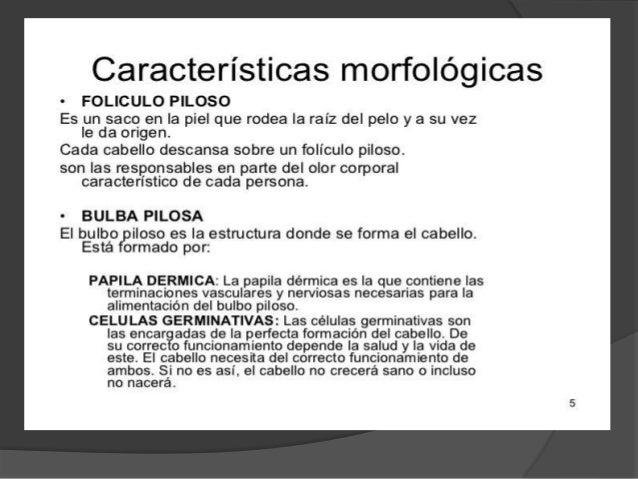 Morfología Del Pelo