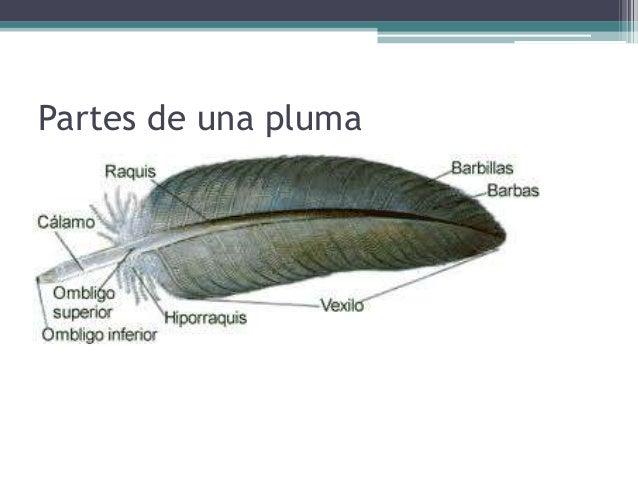 Morfología De Vertebrados