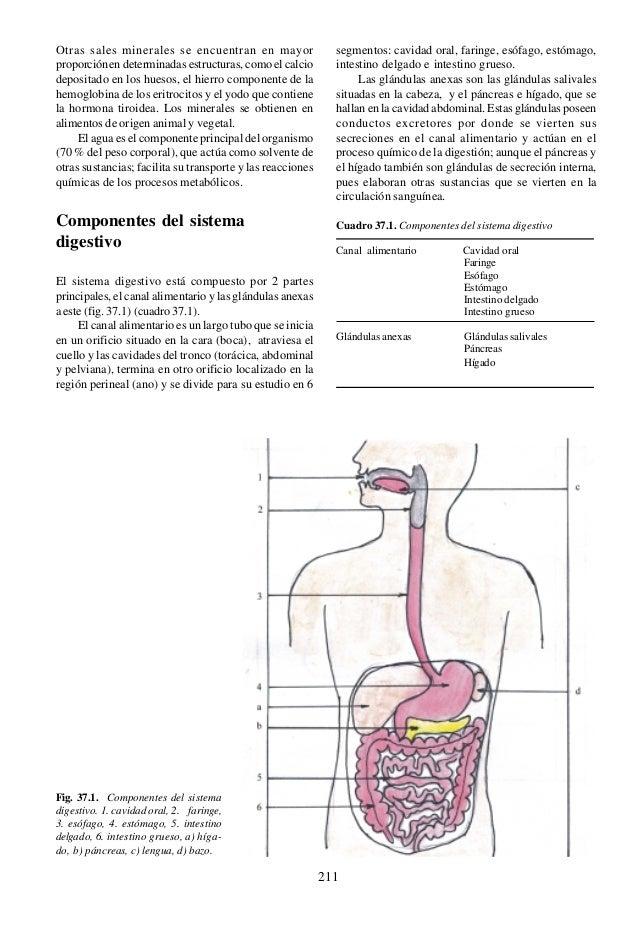 Dorable Diagrama Canal Alimentario Cresta - Imágenes de Anatomía ...