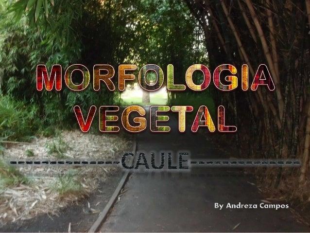 O caule realiza a integração de raízes e folhas, tanto do ponto de vista estrutural como funcional. Em outras palavras, al...