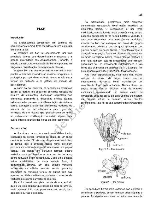 28  FLOR Introdução As angiospermas apresentam um conjunto de características reprodutivas reunidas em uma estrutura exclu...