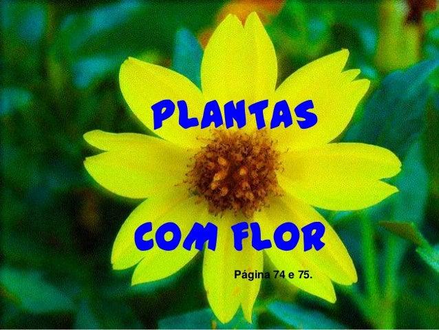 Morfologia Das Plantas Com Flor