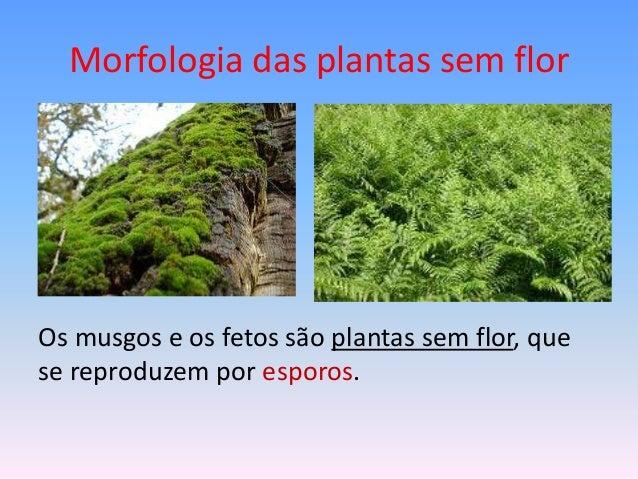 Morfologia das plantas sem flor  Os musgos e os fetos são plantas sem flor, que se reproduzem por esporos.
