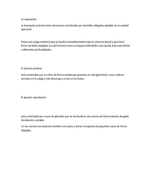 Morfologia de la tilapia