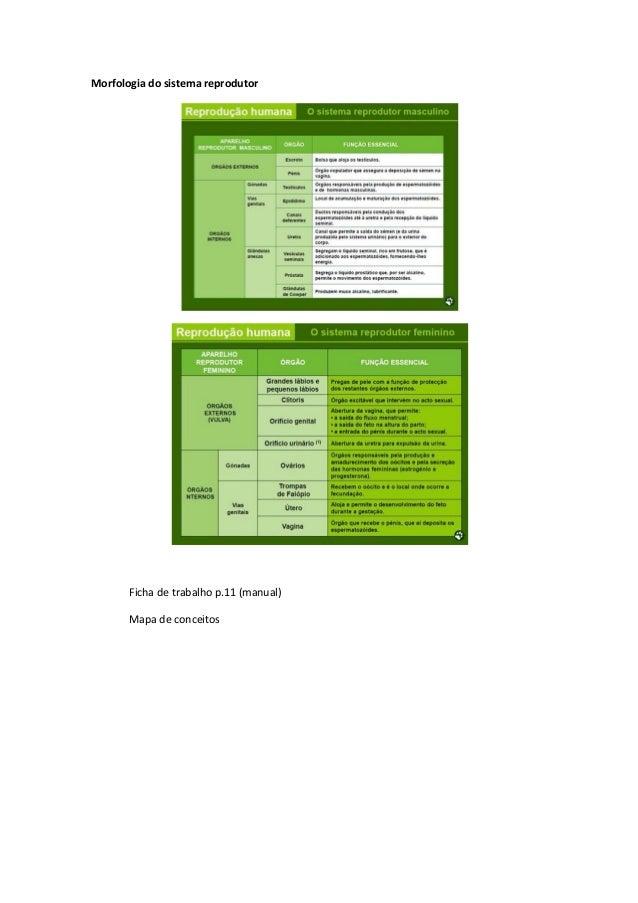 Morfologia do sistema reprodutor  Ficha de trabalho p.11 (manual) Mapa de conceitos