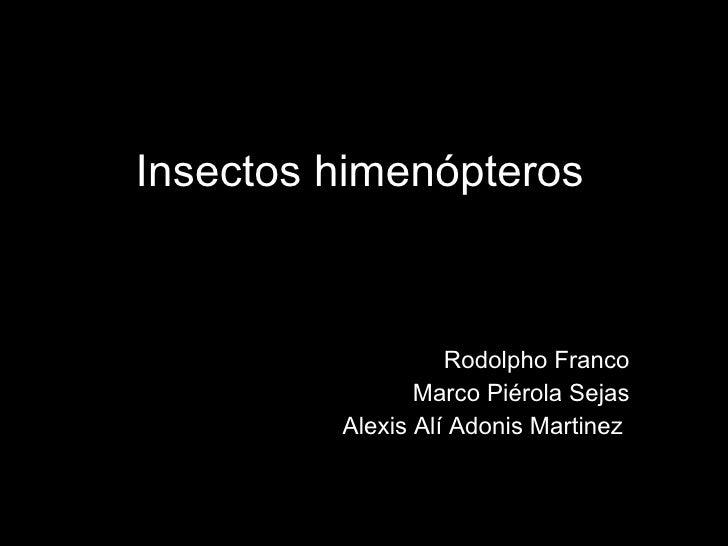 Rodolpho Franco Marco Piérola Sejas Alexis Alí Adonis Martinez  Insectos himenópteros