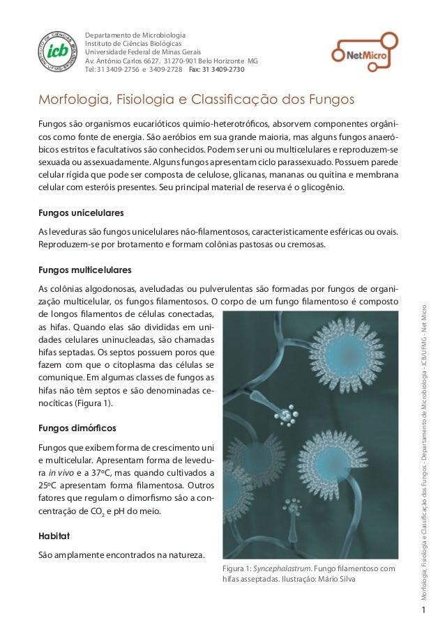 Morfologia,FisiologiaeClassificaçãodosFungos-DepartamentodeMicrobiologia-ICB/UFMG-NetMicroMorfologia, Fisiologia e Classif...