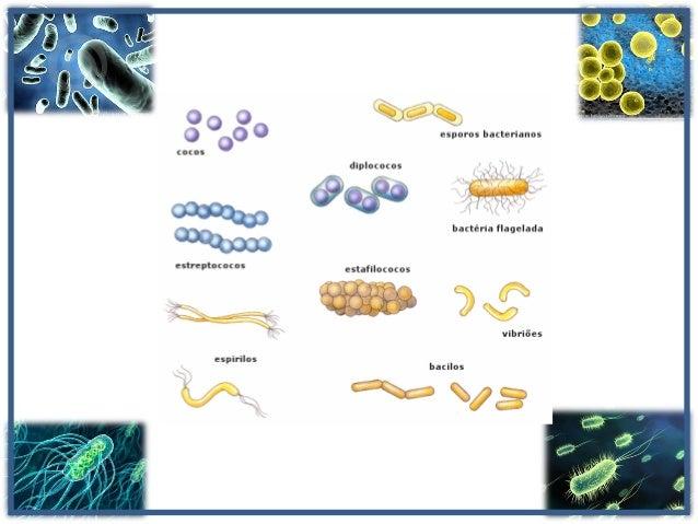 Morfologia, metabolismo, genética e crescimento bacteriano Slide 2