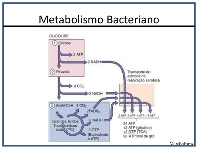 Ocho formas sorprendentemente efectivas para Acelerar metabolismo