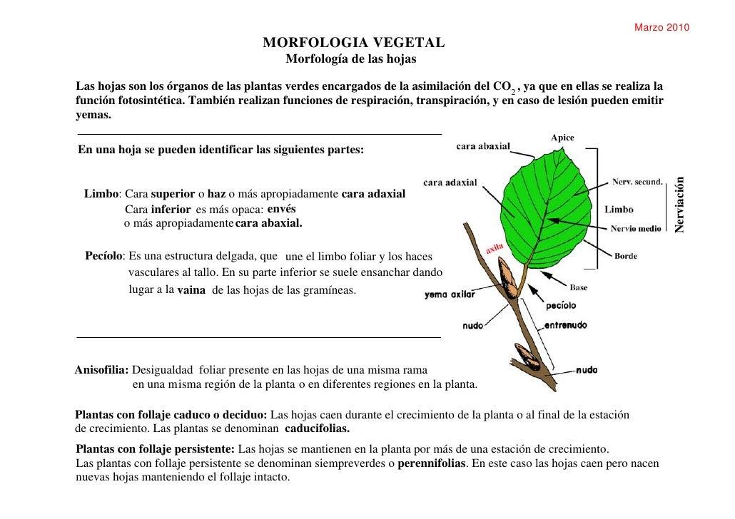 Marzo 2010                                        MORFOLOGIA VEGETAL                                             Morfologí...