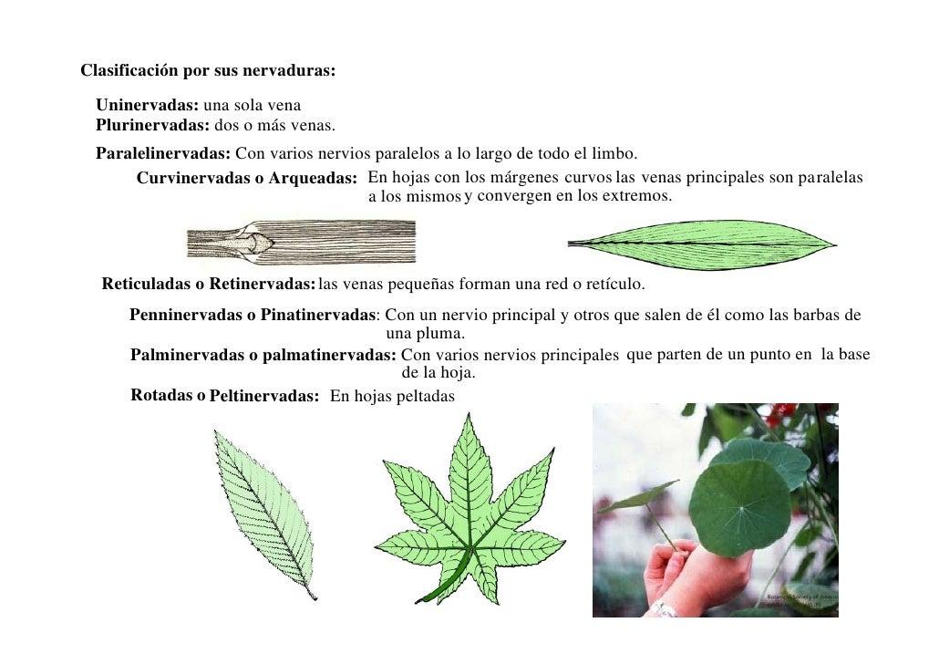 Morfologia Vegetal De La Hoja