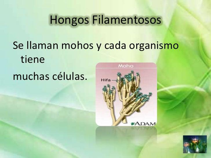 Morfologia Y Reproduccion De Hongos