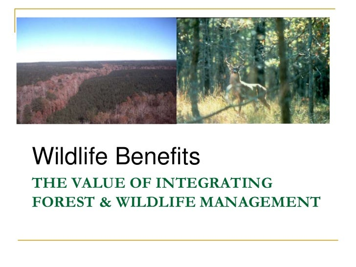 Wildlife BenefitsTHE VALUE OF INTEGRATINGFOREST & WILDLIFE MANAGEMENT