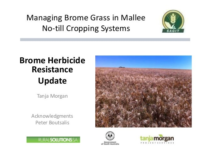 Managing Brome Grass in Mallee No-till Cropping Systems Brome Herbicide Resistance Update Tanja Morgan Acknowledgments Pet...