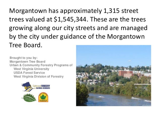 Morgantown has approximately 1,315 street trees valued at $1,545,344. These are the trees growing along our city streets a...