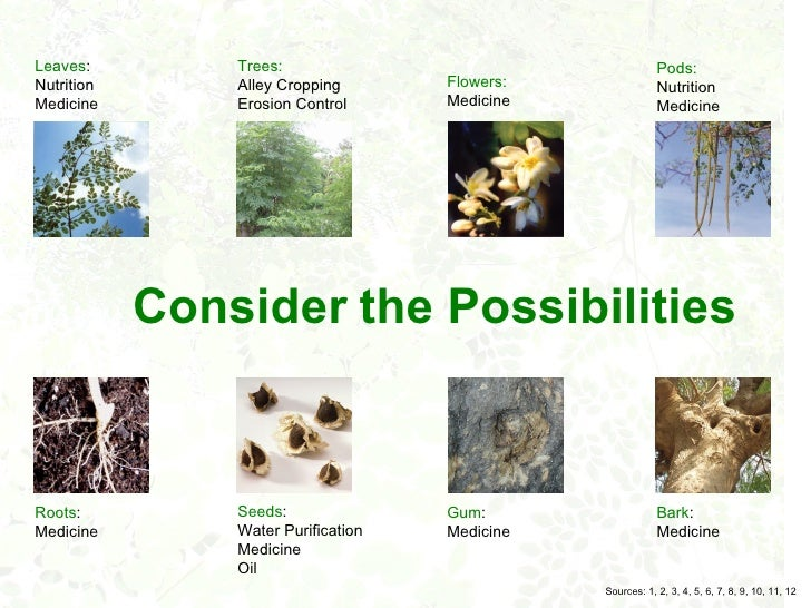malunggay as ointment Mineral macro-nutrients, micro-nutrients & other elements in leaves of malunggay plant (ss magat, et al) as to phytochemicals inherently produced by moringa species.