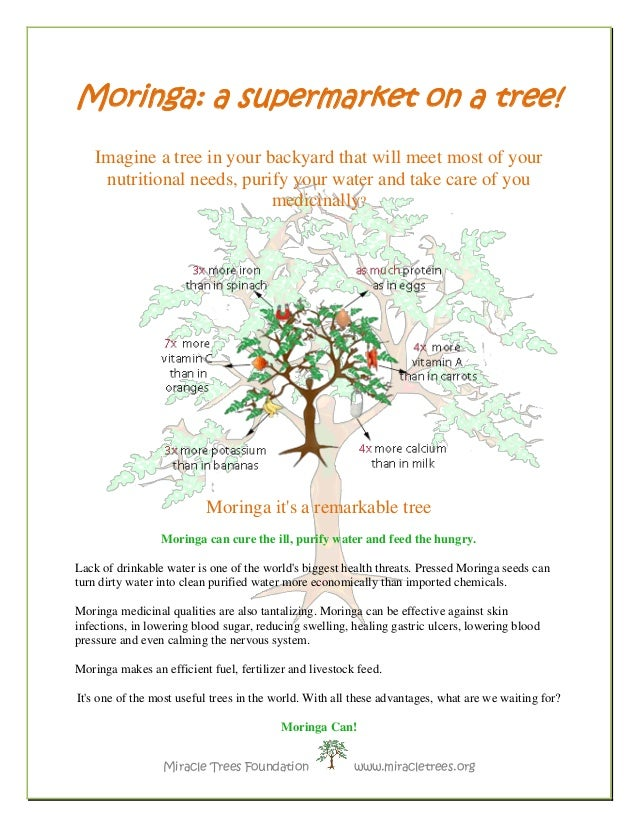Miracle Trees Foundation www.miracletrees.org  Moringa: a supermarket on a tree!  Imagine a tree in your backyard that wil...