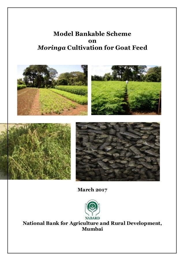 Moringa cultivation for goat feed 1 ha