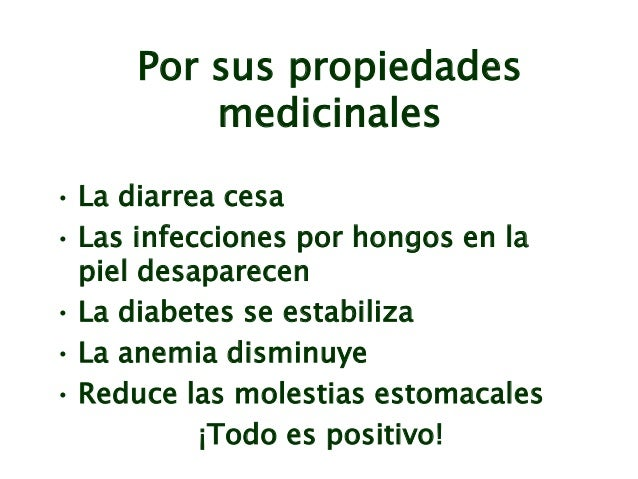 USOS MEDICINALES DE LA MORINGA EBOOK