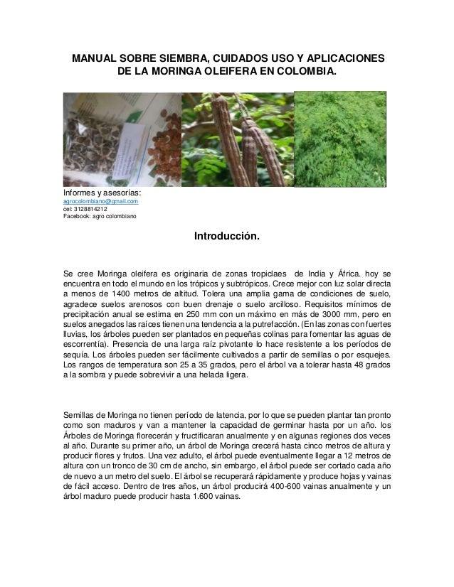 MANUAL SOBRE SIEMBRA, CUIDADOS USO Y APLICACIONES DE LA MORINGA OLEIFERA EN COLOMBIA. Informes y asesorías: agrocolombiano...