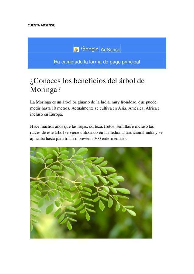 CUENTA ADSENSE, AdSense Ha cambiado la forma de pago principal ¿Conoces los beneficios del árbol de Moringa? La Moringa es...