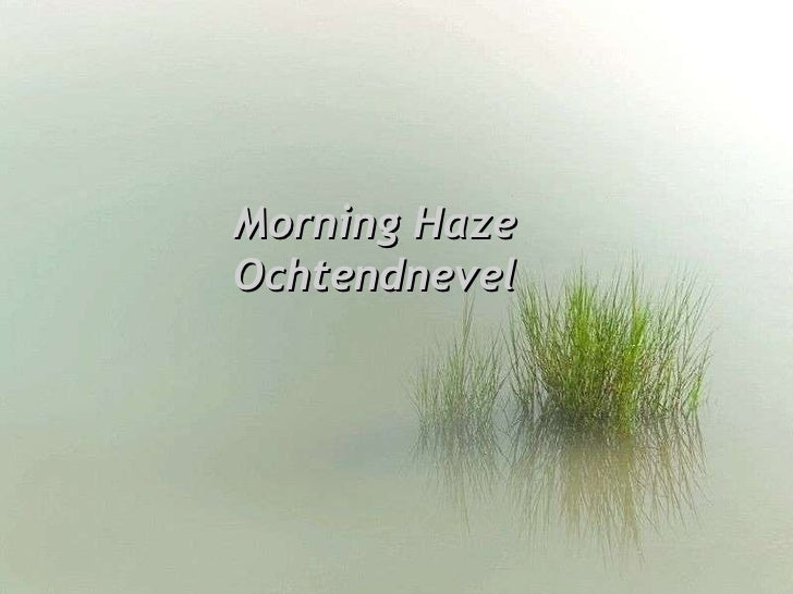 Morning Haze Ochtendnevel