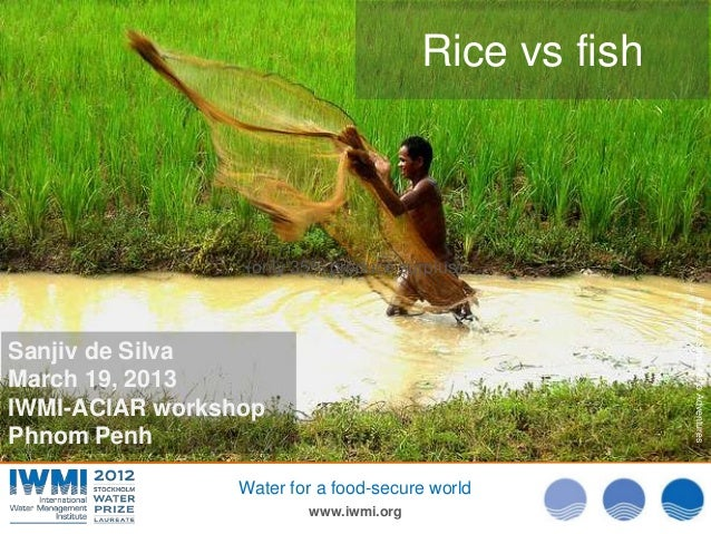 Rice vs fish                 (only 35% produce surplus)                                                       Photo:cc: Sa...