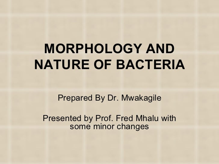 MORPHOLOGY AND NATURE OF BACTERIA Prepared By Dr. Mwakagile Presented by Prof. Fred Mhalu with some minor changes