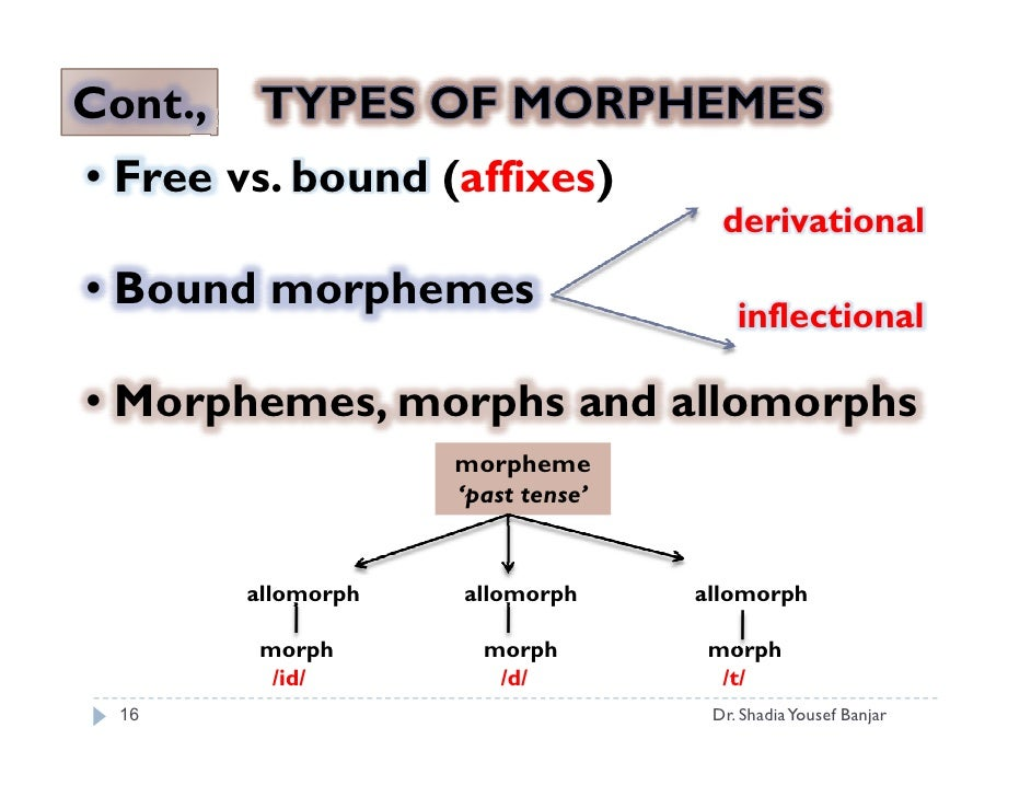 bound morphemes in arabic and english Synonyms and antonyms of morpheme in the english dictionary of translator english - arabic morpheme a bound morpheme cannot stand alone but must be attached.